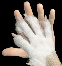 prot animali