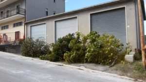 alberi s elia2