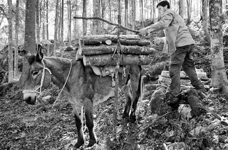 contadino legna